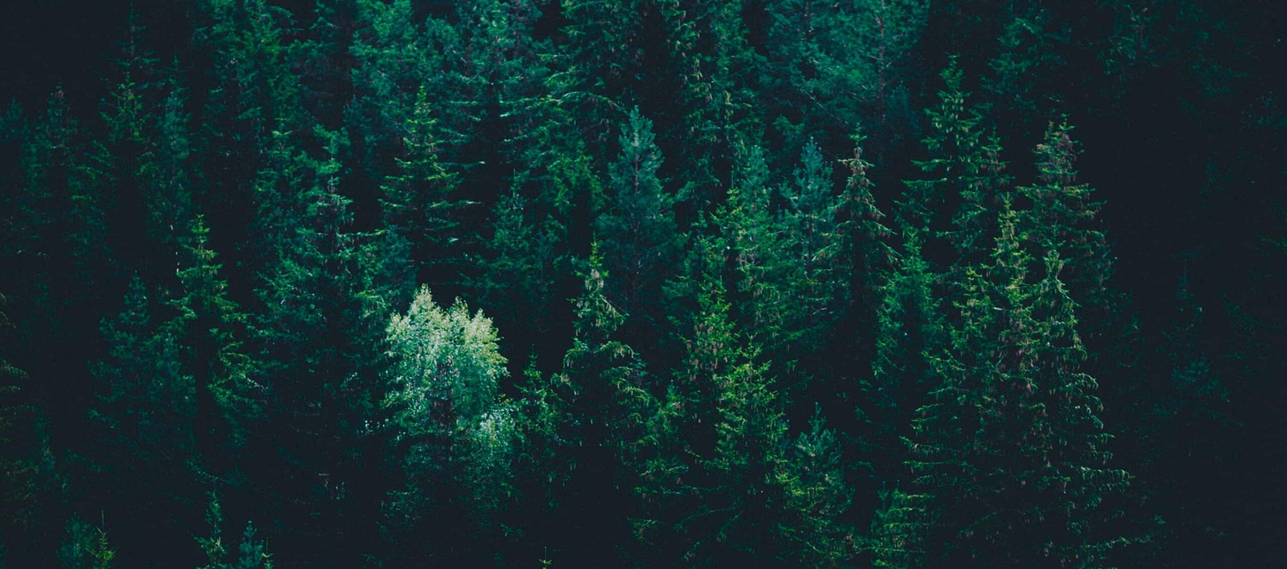 Puu keventää rakentamisen ympäristökuormaa